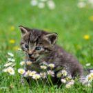 Comment renforcer l'immunité de son chat ?
