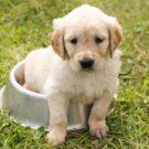 Que faire quand un chien perd du poids ?
