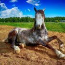 Quels compléments alimentaires pour renforcer les muscles d'un cheval ?