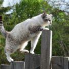 Comment éviter les maladies métaboliques à son chat ?