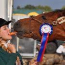 Comment assurer la santé d'un cheval de sport ?