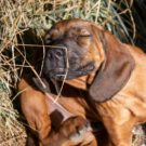 Quels produits pour éviter les démangeaisons à son chien ?