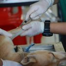 Anti-inflammatoires pour chien : dans quels cas les utiliser ?