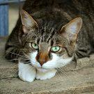 Que faire lorsque votre chat a un rhume ?