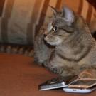 L'e-santé se développe aussi pour les animaux