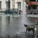 Bien hydrater son chien et son chat pendant l'été