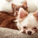 Que faire en cas de rhume chez votre chien ?