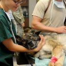 Comment réagir face à une intoxication de son animal ?