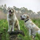 Les tiques du chien : comment les combattre ?