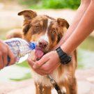 Conseils pour donner un médicament à votre chien