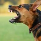 Animaux domestiques: quid de la rage