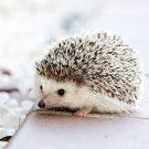 Pourquoi éviter de soigner votre animal avec des médicaments humains ?