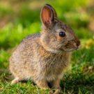 Les soins importants pour les lapins en été